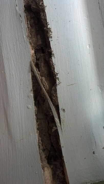 Pays to keep your termite bond up to date!