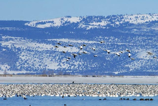 Information about fun activities and attractions for visitors to Klamath Falls, Oregon.