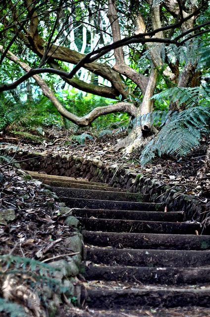 Forest Stairway - Melbourne, Australia
