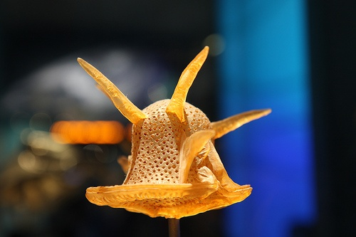 Dinoflagellate Model at NMNH by Mr. T in DC, via Flickr