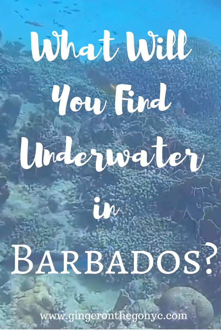 Snorkeling with Balador Catamaran provides a luxurious, peaceful excursion to the shipwreck, a local reef, and a stop to swim with turtles.