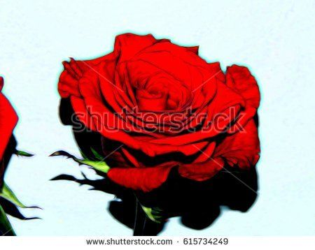 Illustration of a red rose on a white background