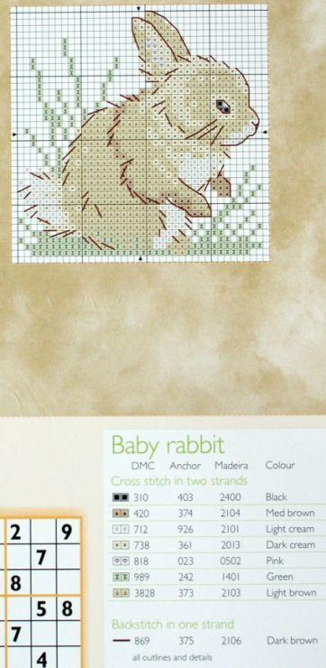 Par dos coelhos pequenos