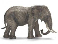 Африканский слон, самка 14657