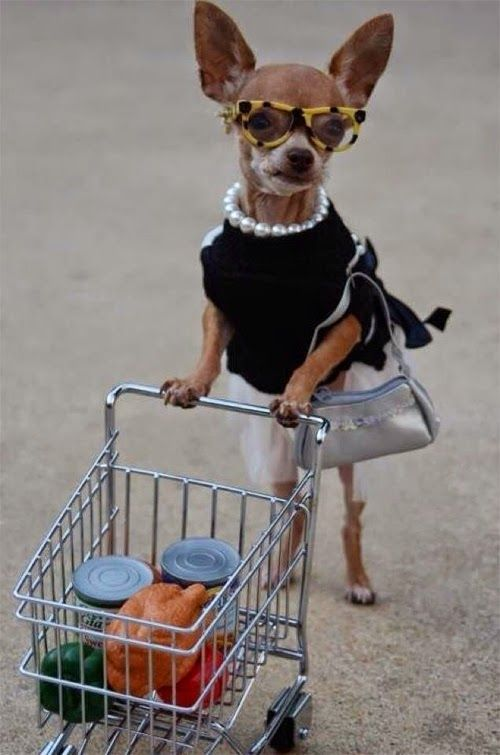 Fashionista Suzie Chihuahua tried shopping at Wal Mart to avoid the paparazzi....not working