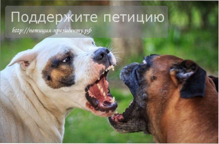 Петиция за запрет бойцовских собак в Росии http://петиция-президенту.рф/петиция-за-запрет-бойцовских-собак-в-р/  Запретите пожалуйста в России разведение всех собак бойцовых пород: питбультерьеры, бультерьеры, американские стаффордширские терьеры и просто стаффордширские-терьеры. Хозяевам необходимо стерилизовать всех своих животных данных пород. #собаки #защитаживотных