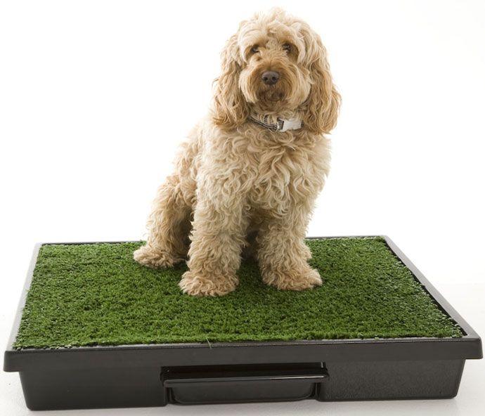 Te mostramos las ventajas, qué necesitas y cómo enseñar a tu pequeño perro a usar una caja de arena para perros.