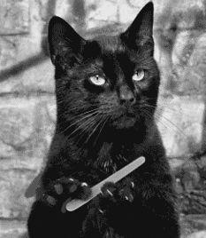 Blog sobre #gatos| Por qué no debes temer a un #gato #negro