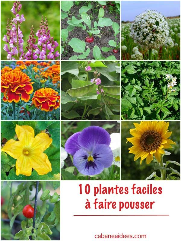 Les 25 meilleures id es de la cat gorie commencer un jardin sur pinterest planter un jardin - Plantes d int u00e9rieur faciles d entretien ...