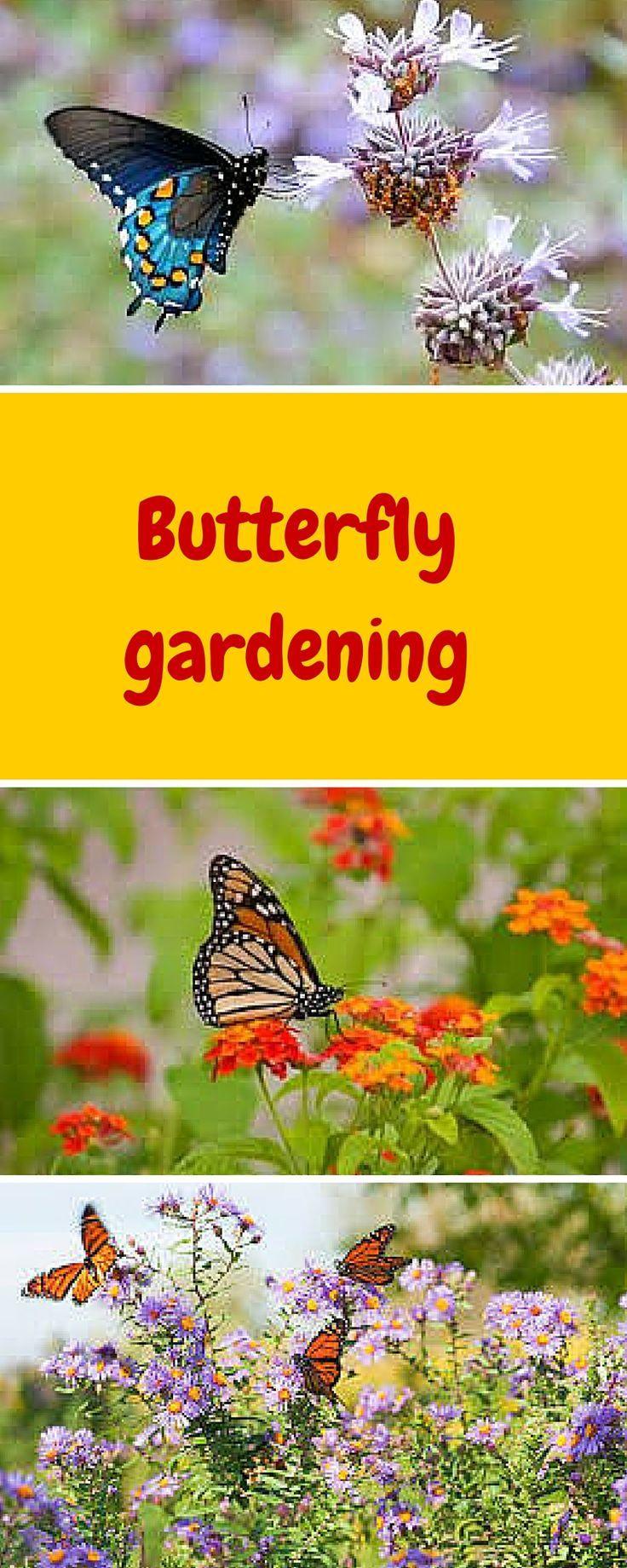 1000 Ideas About Butterfly Garden Plants On Pinterest Live Butterfly Garden Full Sun