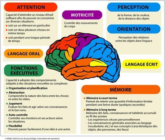 """Résultat de recherche d'images pour """"neurone du cerveau schéma"""""""
