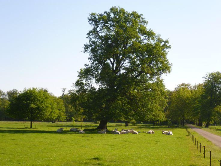 2011-06 Vanaf Kasteel Twickel loop je het fraaie bos van het landgoed in