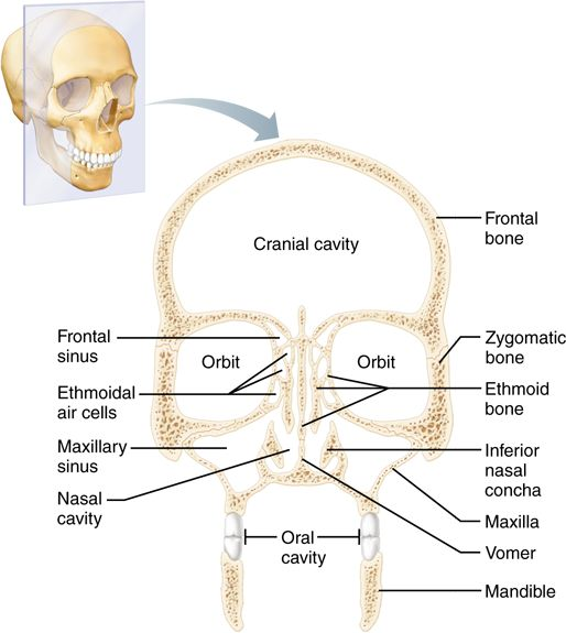 Wrong with anatomy of the facial bones