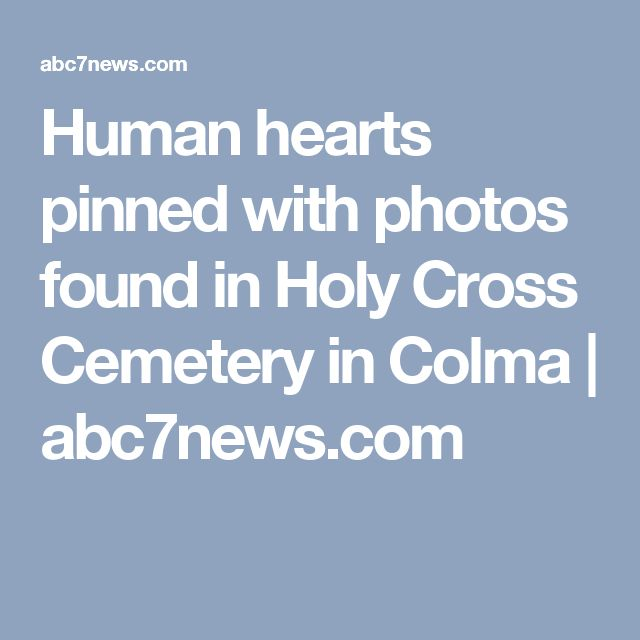 Human hearts pinned with photos found in Holy Cross Cemetery in Colma   abc7news.com