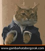Gambar animasi binatang lucu bergerak, kucing joget :D