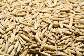 Oats. Most common. Safe to feed horses. One of the favorites. Less vulnerable to mold. Lower energy density. Whole is best. Processed loses nutritional value after a few weeks. http://www.theequinest.com/care/food/grain/