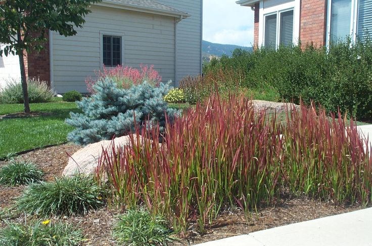 27 best images about ornamental grasses on pinterest for Ornamental grass garden ideas