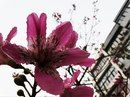 late october flower