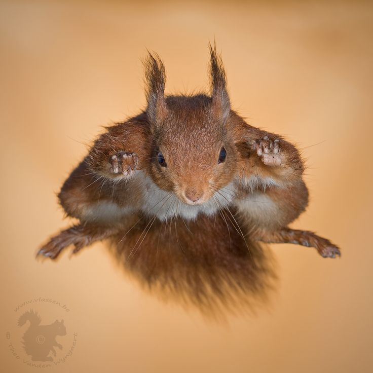 Watch out: incoming squirrel! by Theo Vanden Wyngaert on 500px