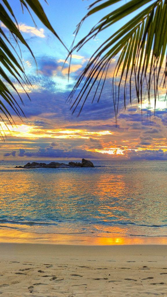 beach_tropics_sea_sand_palm_trees_84750_640x1136 | Flickr - Photo Sharing!