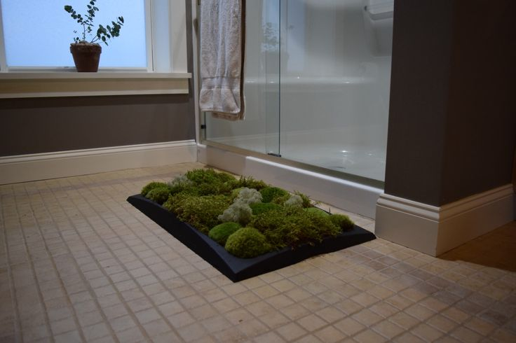 Moss Bath Mat kit (Pillow Moss, Black Tray)- Holiday Gift Idea! by BPZoological on Etsy https://www.etsy.com/listing/493631513/moss-bath-mat-kit-pillow-moss-black-tray