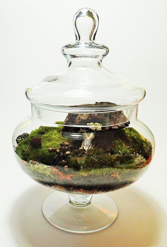 Moss Terrarium Bilby in burrow Sydney by HillandValleyStudio