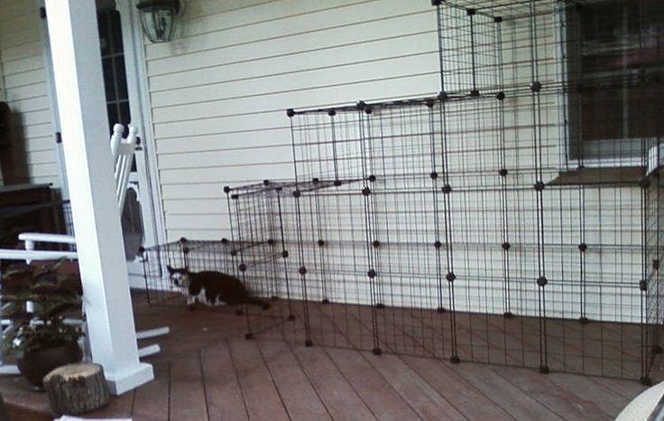 Build a doityourself outdoor cat enclosure or run