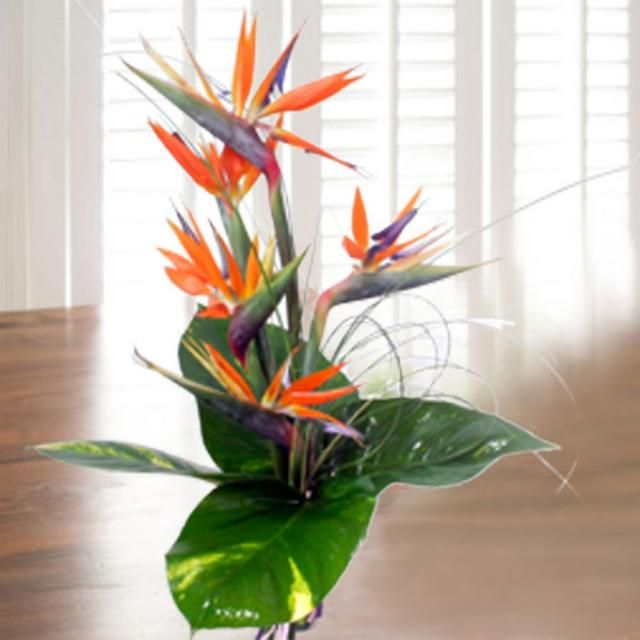5 Bird Of Paradise Hand Bouquet
