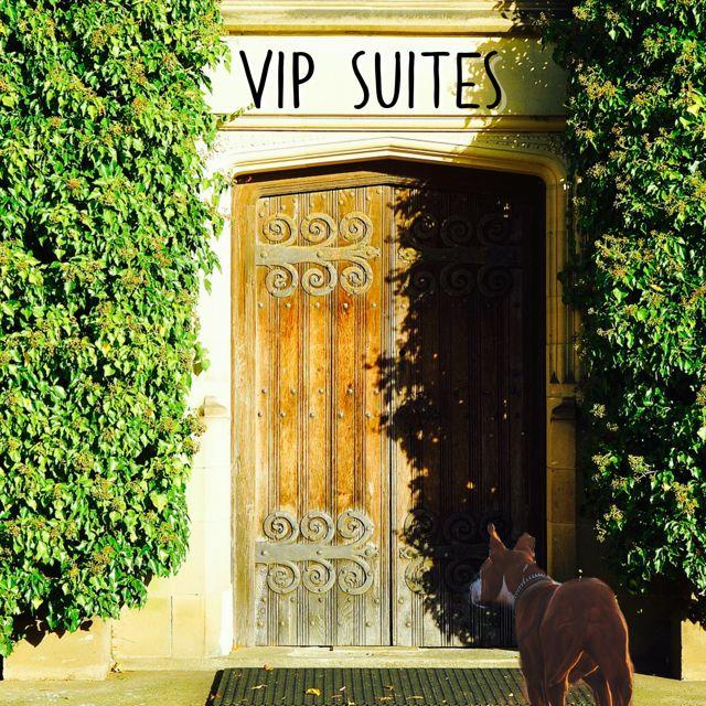 Nbvhb Vip Suites Veterinary Hospital Pets Veterinary Care