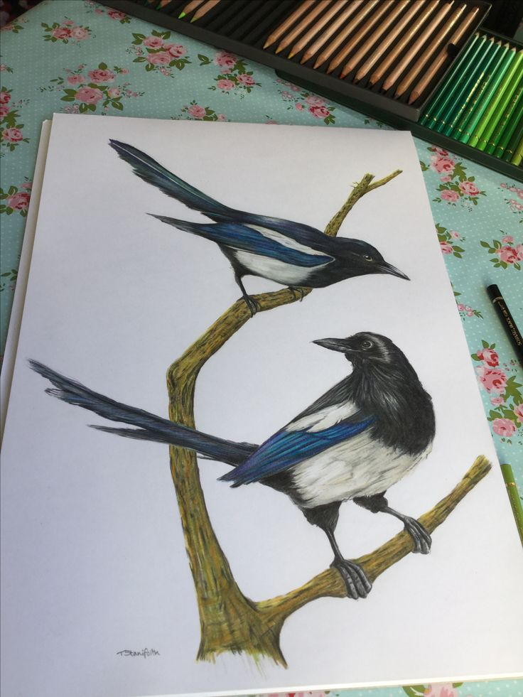 Magpies portrait by TeresaSArtPage, coloured pencil
