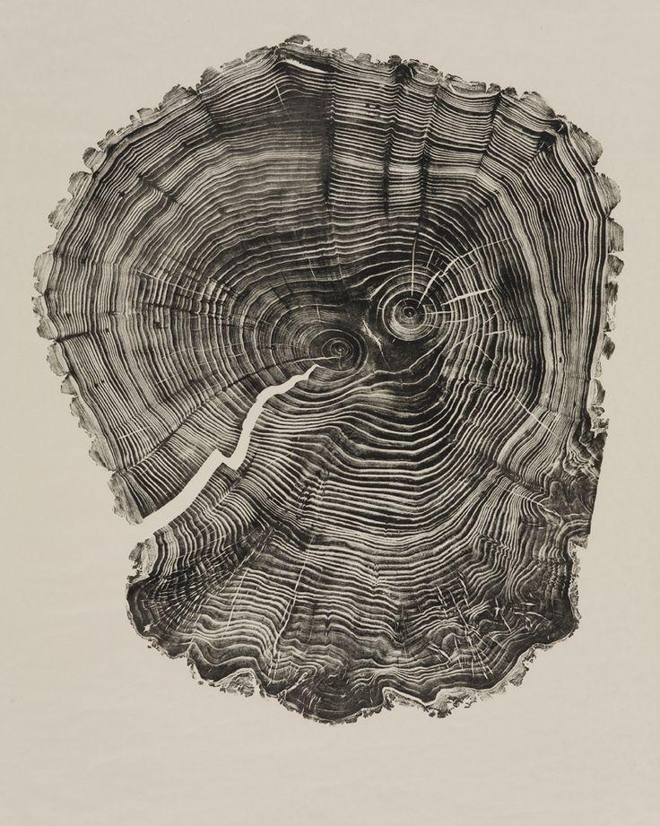 Bryan Nash Gill reproduit les stries visibles sur des tranches d'arbres avec des illustrations en grand format.