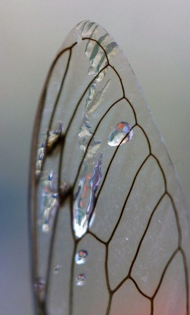 Great example of Macro photography. Water & wing wow wadda shot...say that fast 3 x's...lol
