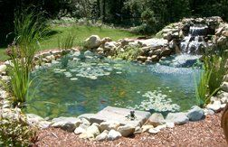 Clear Pond Complete In-Ground Backyard Pond Kit – 4ft. x 6ft. x 18in. Deep, Model# 71104 | Best Buy Outdoor Living Products Store