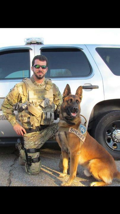 If this dog works for the Sheriff's department, does that make him Deputy Dawg? Beautiful animal. K9
