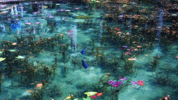 Il giardino di Giverny a cui il pittore impressionista francese Claude Monet dedicò trent'anni di produzioni, lasciandoci in eredità il variopinto ciclo de «Le ninfee» esposte al Museo dell'Orangerie di Parigi così come alla National Gallery di Londra e al Metropolitan Museum di New York, ha un degno rivale orientale, incastonato tra le montagne che circondano Seki, nella prefettura di Gifu, in Giappone. Video realizzato da AQUA Geo Graphic °