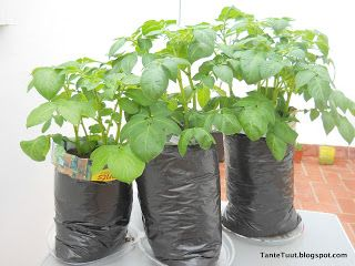 Bij Tante Tuut op de Koffie: Update aardappelen planten in zakken