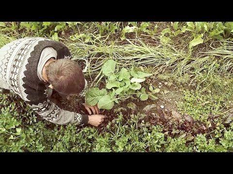 Der Saatzieher - Altes Wissen, neue Landwirtschaft - YouTube