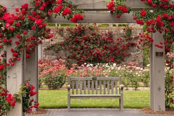 Beautiful Rose Garden Romantic Red Roses Wooden Garden Bench