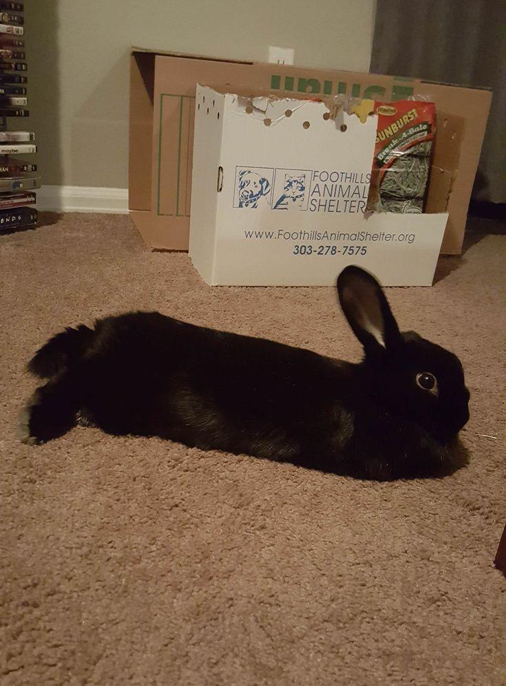 My sweet Dahlia bun http//ift.tt/2tOFR8k Pet rabbit