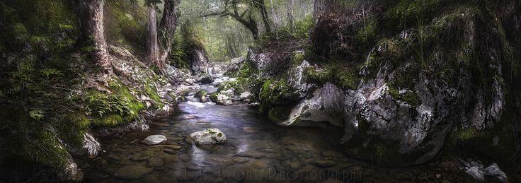 Sierra Negra Highlands Forest Creek by Luis Lyons - Photo 202676169 / 500px