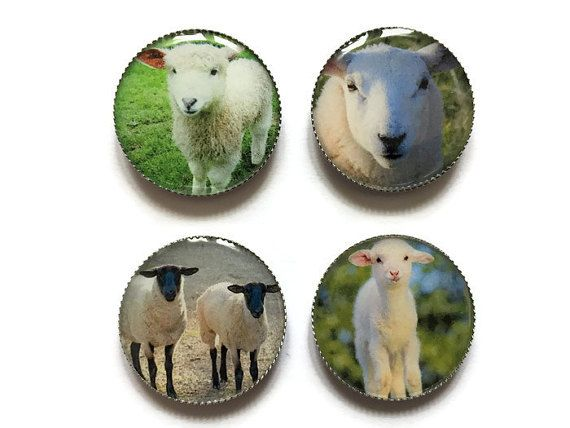 Sheep magnets, lamb magnet, farm animals magnet, barnyard animal magnets
