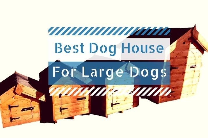 Best Dog House For Large Xl Dogs 2018 Reviews Of The Best Outdoor House For Your Pet In 2020 With Images Cool Dog Houses Best Dogs Dog House