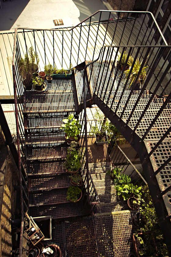 Best 39 Best Fire Escape Plants Images On Pinterest Fire 400 x 300