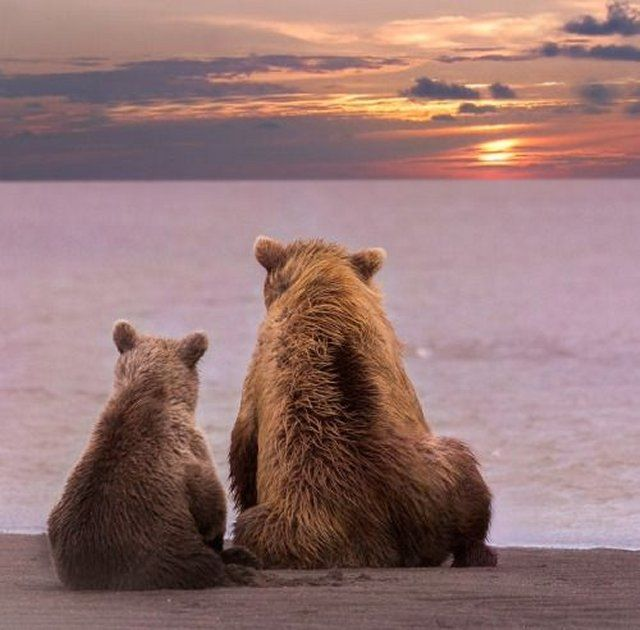 Mother Grizzly Bear sitting by the Water Edge with her Baby Cub