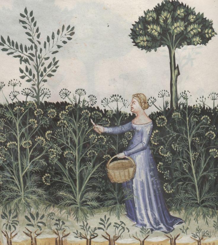 A woman harvesting fennel - Feniculus | Österreichische Nationalbibliothek - Austrian National Library | Public Domain