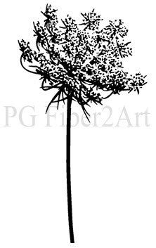 Queen Anne's Lace open by PGFiber2Art on Etsy, $7.00