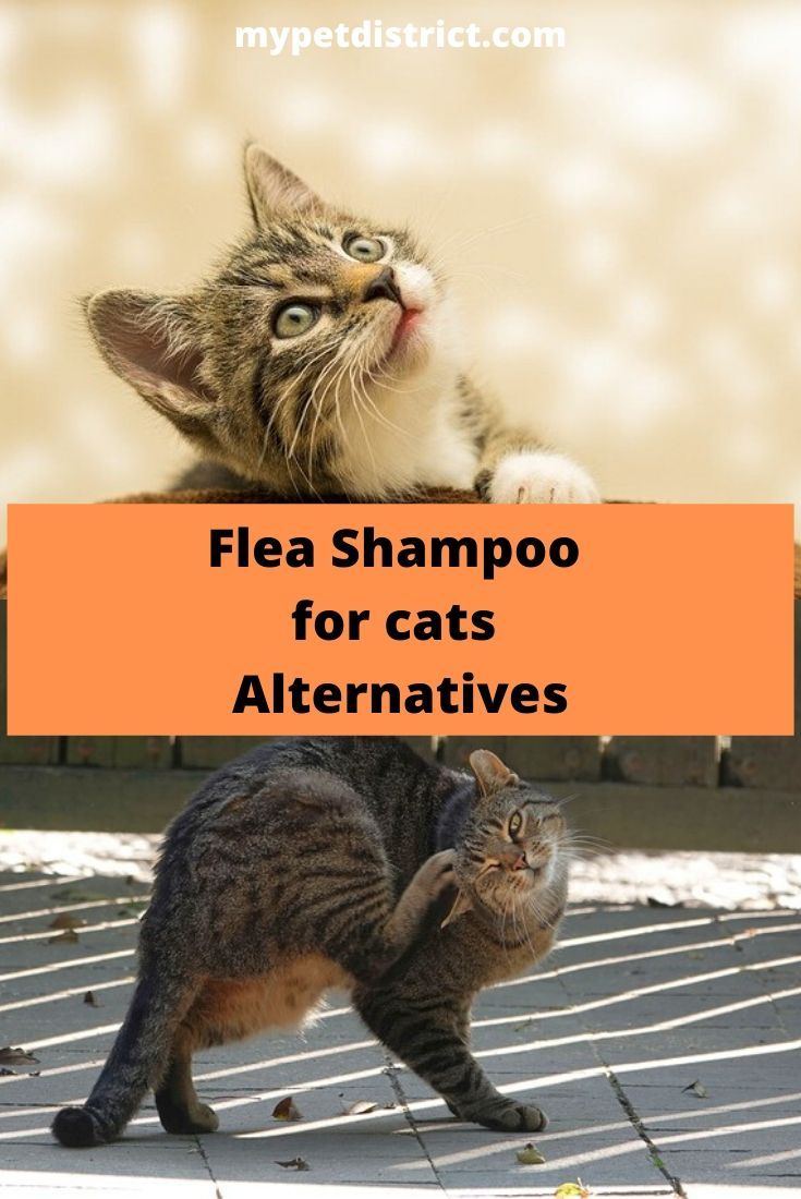 4 Best Flea Shampoos For Cats In 2019 Get Rid Of Fleas Fast In 2020 Flea Shampoo For Cats Cats Cat Fleas Treatment