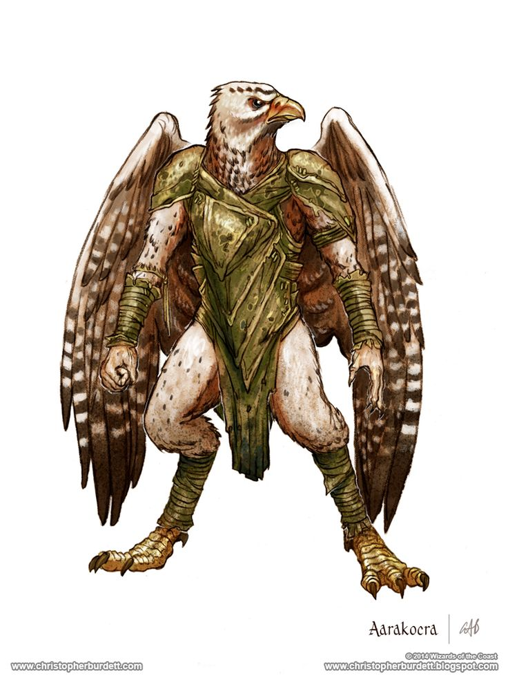 Aarakocra - 5th Edition Dungeons and Dragons by christopherburdett bird humanoid anthro monster beast creature animal | Create your own roleplaying game material w/ RPG Bard: www.rpgbard.com | Writing inspiration for Dungeons and Dragons DND D&D Pathfinder PFRPG Warhammer 40k Star Wars Shadowrun Call of Cthulhu Lord of the Rings LoTR + d20 fantasy science fiction scifi horror design | Not Trusty Sword art: click artwork for source