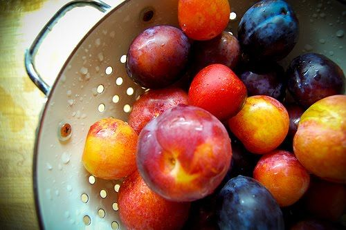 hungry tigress » can jam round up: stone fruit: tons of water bath canner stone fruit recipes.