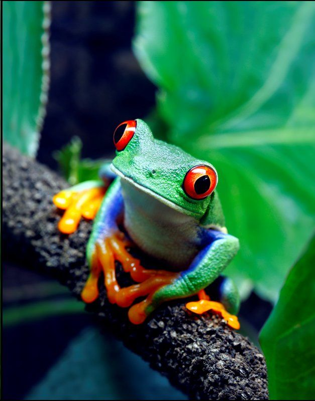 Ok this frog is pretty exotic but we are hoping to entice some of his distant cousins to stay